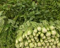 Olika nya grönsaker i marknad Arkivbild