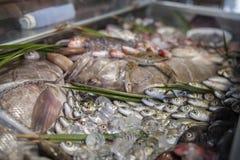 Olika nya skaldjur och fiskar i fiskmarknad royaltyfri foto