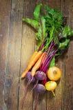 Olika, nya unga grönsaker, beta, morötter Royaltyfri Bild