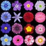 Olika röda, rosa, blåa och purpura blommor Arkivfoto