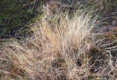 Olika sikter av höstlandskap Arkivbilder