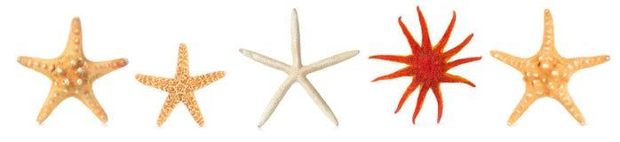 Olika sjöstjärnor i rad Royaltyfria Bilder