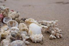Olika skal på den sandiga stranden i sommar begrepp av den bra semestern Arkivfoto