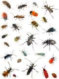 Olika skalbaggar på vit bakgrund Royaltyfri Bild