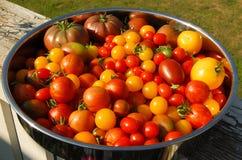 Olika slag av tomater på en maträtt Royaltyfri Foto