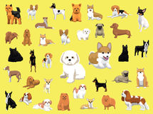 Olika små hundavel poserar Royaltyfri Foto