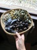 Olika sorter av örten med trevliga lukter Arkivfoton