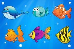 Olika sorter av fiskar under havet Royaltyfri Bild