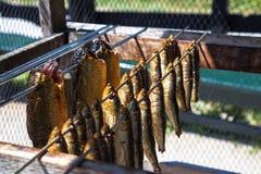 Olika sorter av havsfisken hänger i smokehousen Arkivbild