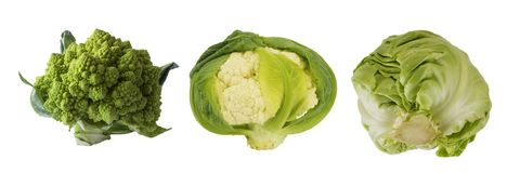 Olika sorter av kål Broccoli, blomkål och kål som isoleras på vit bakgrund Arkivfoton