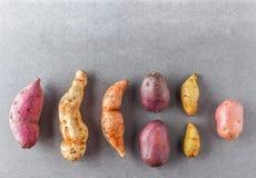 Olika sorter av potatisar sänker lekmanna- royaltyfri fotografi