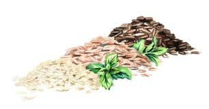 Olika sorter av rice Drog illustrationer för vattenfärg som hand isoleras på vit bakgrund royaltyfri illustrationer