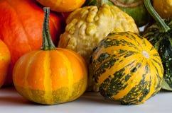 Olika sorter och färgpumpor Flerfärgade halloween pumpor Arkivfoto