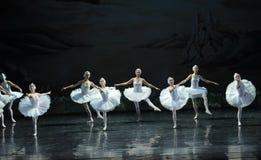 Olika ställingar av Svan-balett svan sjön Arkivfoto