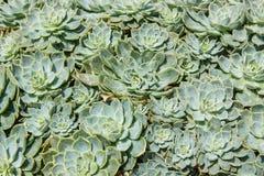 Olika suckulenter och växter Arkivbilder