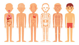 Olika system av människokroppdiagramillustrationen vektor illustrationer