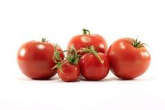 olika tomattyper Arkivfoto