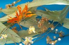 Olika torkade örter som isoleras över blått Tycka om ett naturligt te royaltyfria bilder