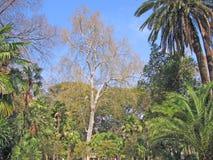 Olika träd och buskar Royaltyfria Bilder