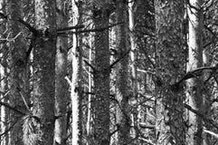 olika treestammar Royaltyfria Foton