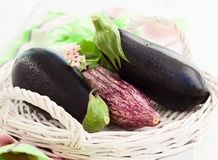 Nya aubergines Arkivbild