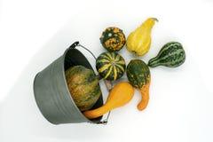 Olika typer av dekorativ squash faller från en hink royaltyfri foto