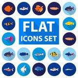 Olika typer av fisken sänker symboler i uppsättningsamlingen för design Rengöringsduk för materiel för flotta- och akvariefiskvek royaltyfri illustrationer