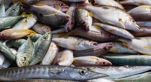Olika typer av havsfisken Royaltyfri Fotografi