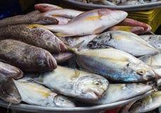 Olika typer av havsfisken på marknaden Royaltyfri Fotografi