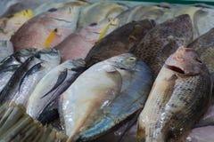 Olika typer av havsfisken på marknaden, Vietnam Arkivfoto