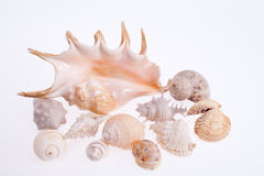 Olika typer av havsskal som isoleras på vit bakgrund Royaltyfri Foto