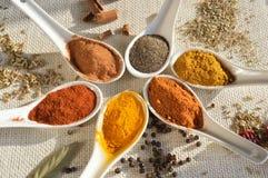 Olika typer av kryddor royaltyfri fotografi