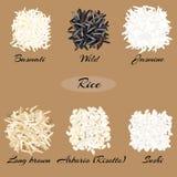 Olika typer av rice royaltyfri illustrationer