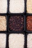 Olika typer av ris Arkivbilder