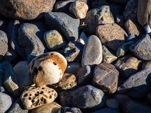 Olika typer av strandstenen, Japan Asien Royaltyfria Foton