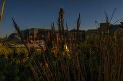 Olika typer av växter och i bakgrunden byggnaderna av Arkivfoton