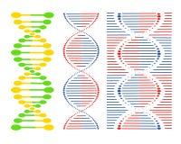 Olika uppsättningar för DNA av spiral på en vit bakgrund det mitt designelementgallerit ser var god liknande till den din vektorv royaltyfri illustrationer