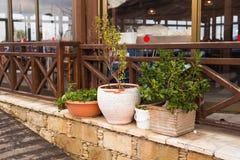 Olika utomhus- inlagda växter och plantor Arkivbild