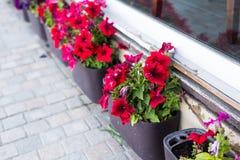 Olika utomhus- inlagda växter och plantor Fotografering för Bildbyråer