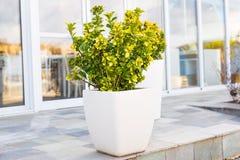 Olika utomhus- inlagda växter och plantor Royaltyfri Fotografi