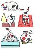 Olika uttryck och handlingar för katter Royaltyfria Bilder