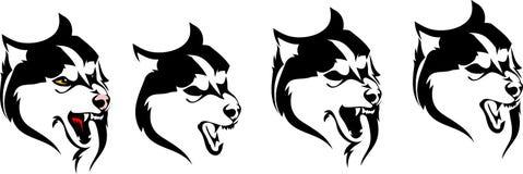 Olika varianter av den head hunden föder upp Siberian skrovligt Royaltyfri Illustrationer