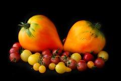 Olika variationer och format av tomater på en svart bakgrund royaltyfria foton