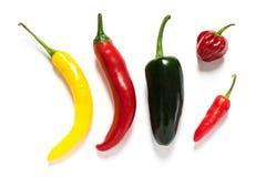 Olika varma chili på vit bakgrund Fotografering för Bildbyråer