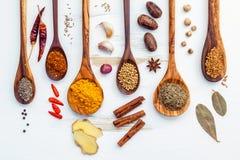 Olikt av indiska kryddor och örter i träskedar Lägenhet som är lekmanna- av Royaltyfri Bild