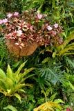 Olikt gräs i skog Arkivfoto