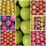 olikt moget äpplecollage, jordbruk och frukttema Arkivfoton