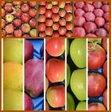 olikt moget äpplecollage, jordbruk och frukttema Royaltyfri Bild