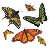 olikt realistiskt för fjärilar Royaltyfri Fotografi