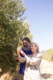 Olio d'oliva d'esame delle coppie felici in azienda agricola Fotografia Stock